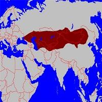 tjurkskih jazykov